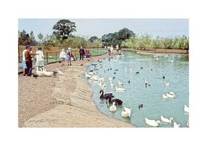 Vintage photograph Flamingo Park Isle Of Wight